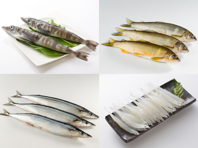 其他魚類(整尾)